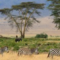 Tanzania – Serengeti National Park